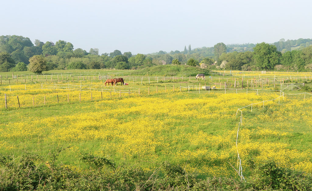 View on the fields from the path (Bristol to Bath Cyclingh Path)