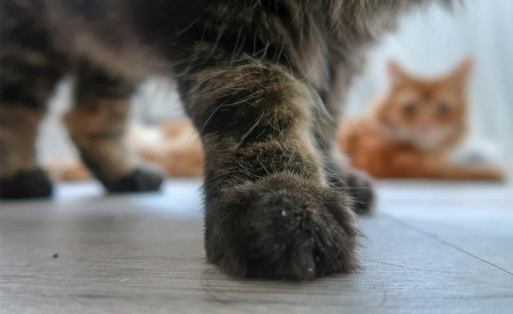 Bo chciec to moc pomysly na weekend w Anglii. Koty i opieka wyjedziesz w podróż