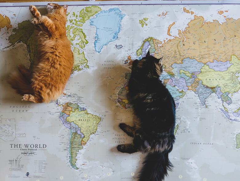 Bo chciec to moc pomysly na weekend w Anglii. Koty i opieka