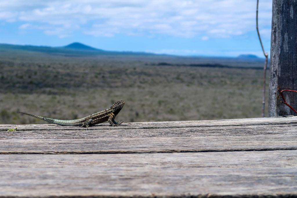 Punkt widokowy w drodze na Mur Łez / Ścianę Płaczu na Galapagos, Isla Isabela