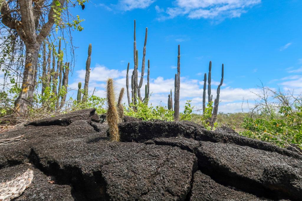 Kaktusy na Isla Isabela, Galapagos, Żółwie Wyspy