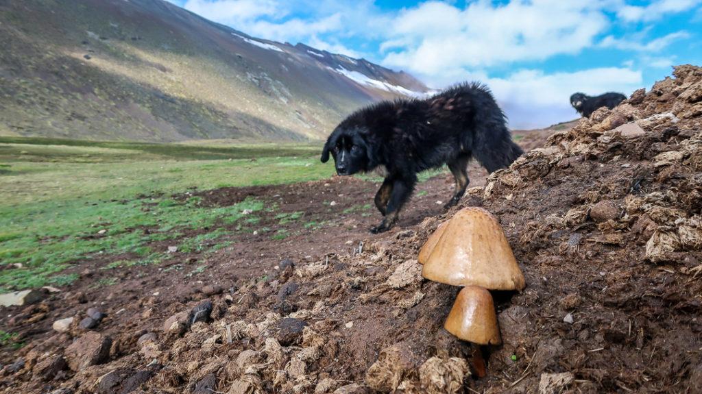Bezdomne psy są częstym widokiem na ulicach czy szlakach Ameryki Południowej