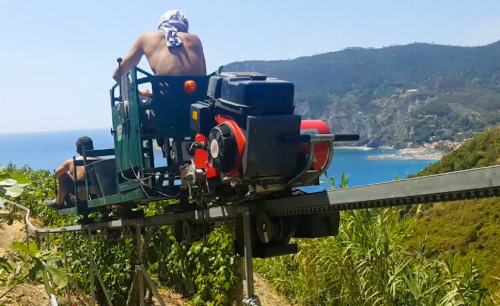 Kolejka do zbioru winogron w Cinque Terre