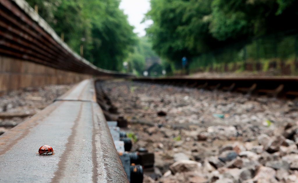 Ladybird at railway tracks ...