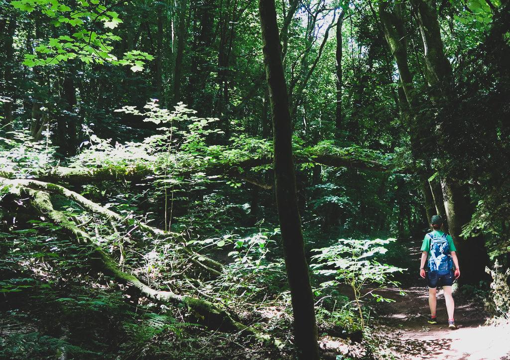 Trasa spacerowa po lesie Leigh Woods