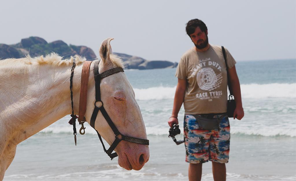 Agonda konie i budżetowy lusksu