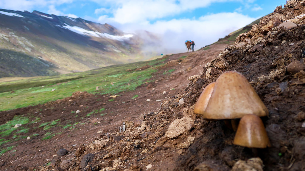 Tęczowe Góry, Góry Siedmiu Kolorów, Peru, Cusco, Pitumarka