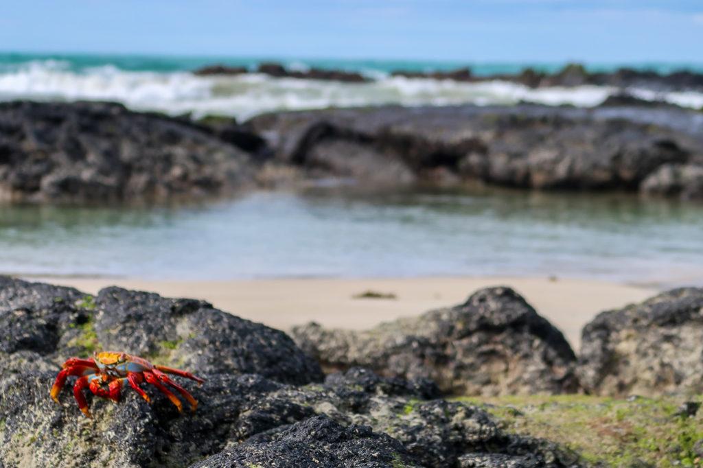 Bo Chcieć To Móc, blog podróżniczy o Galapagos